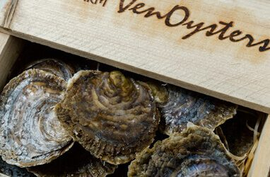 Oyster Trophy Week 2017 Special